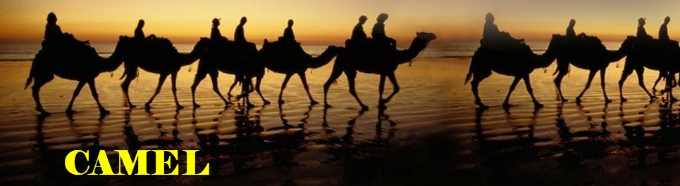 Camel - Hausmynd
